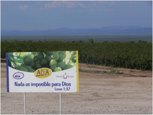 Agribusiness keeps expanding in Hermosillo area despite proclaimed water crisis,