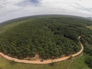 31 de mayo del 2014. Vista aérea de una pequeña parte de los monocultivos de palma africana que se expanden por el caribe hondureño debido a intereses de empresarios corrutos como Miguel Facussé. http://caravanaclimatica.org/